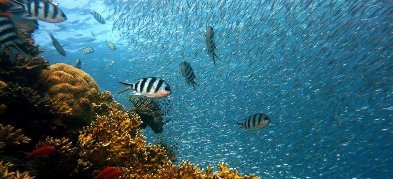 ScubaSPA Malediwy