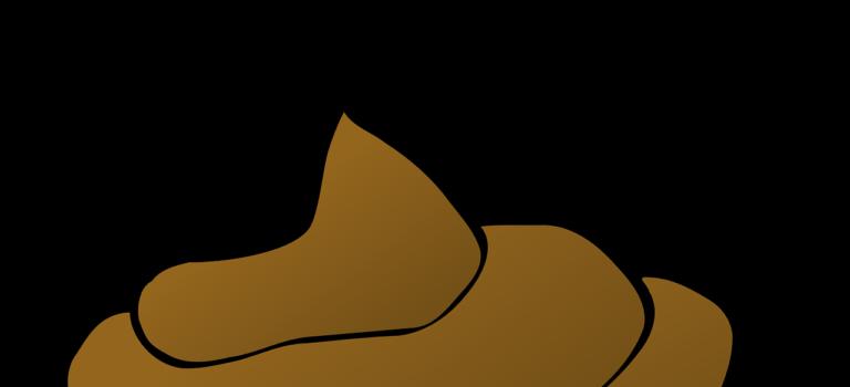Woreczki na psie odchody – jakie wybrać?
